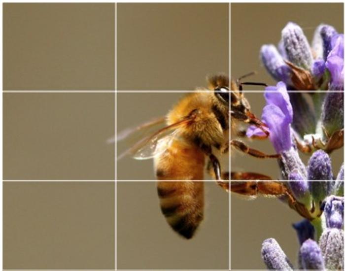 Изображение пчелы на цветке