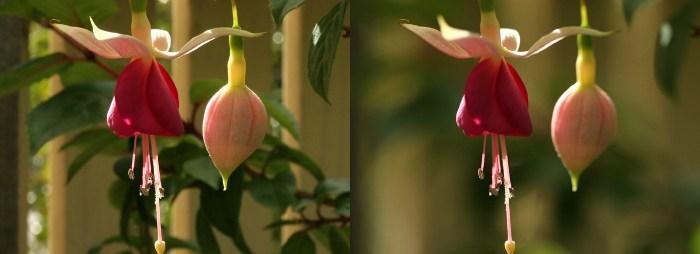 Снимки цветов сделанных в саду