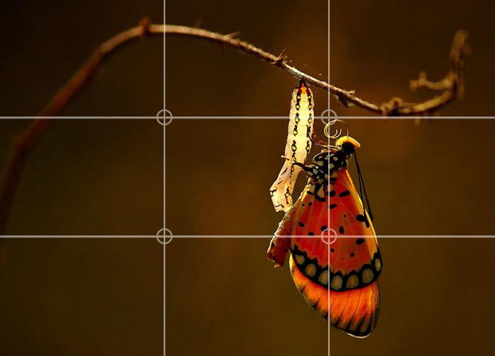 Изображении бабочки