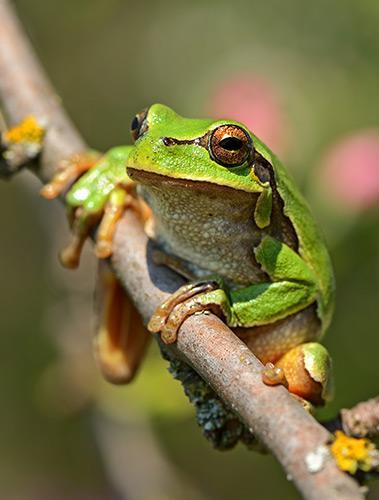 Макроснимок лягушки