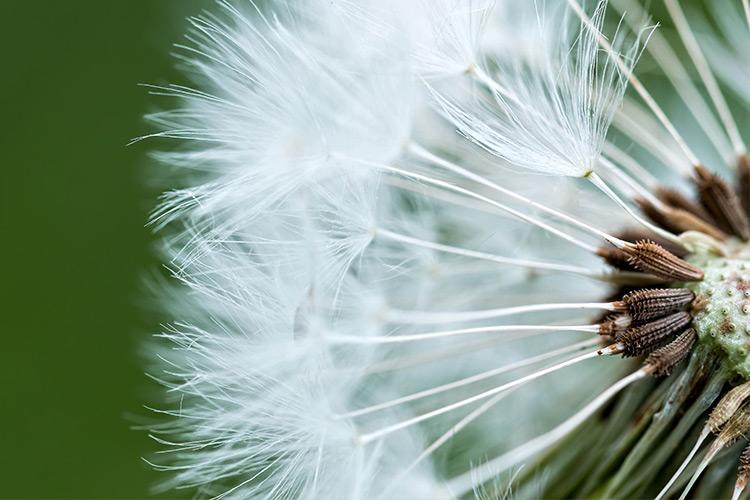Макроснимок цветка