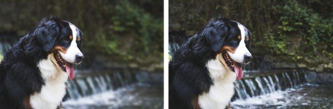 Фотоснимок собаки, сделанный фотокамерами с разным размером сенсора