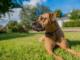 5 идей о том, как получить забавные фотографии собак.