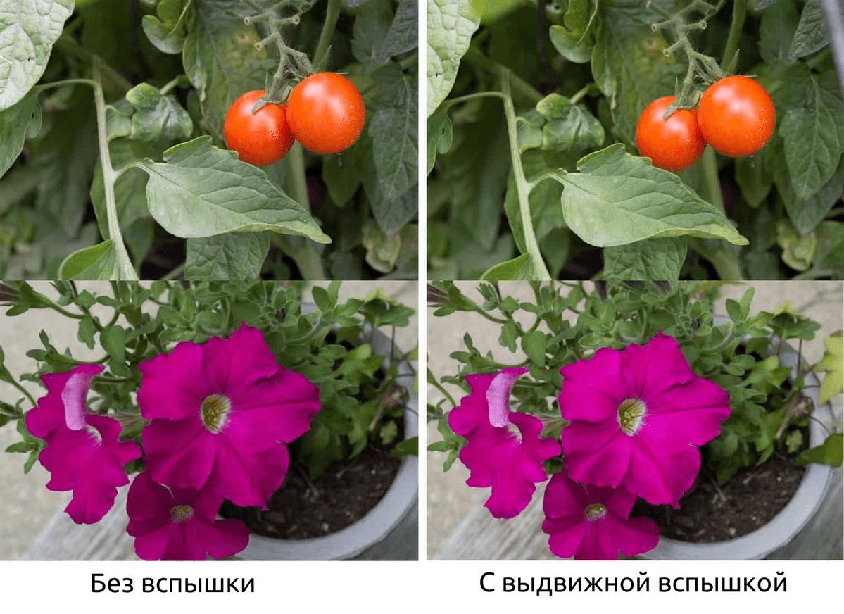 Сравнение снимка сделанного без вспышки и с вспышкой