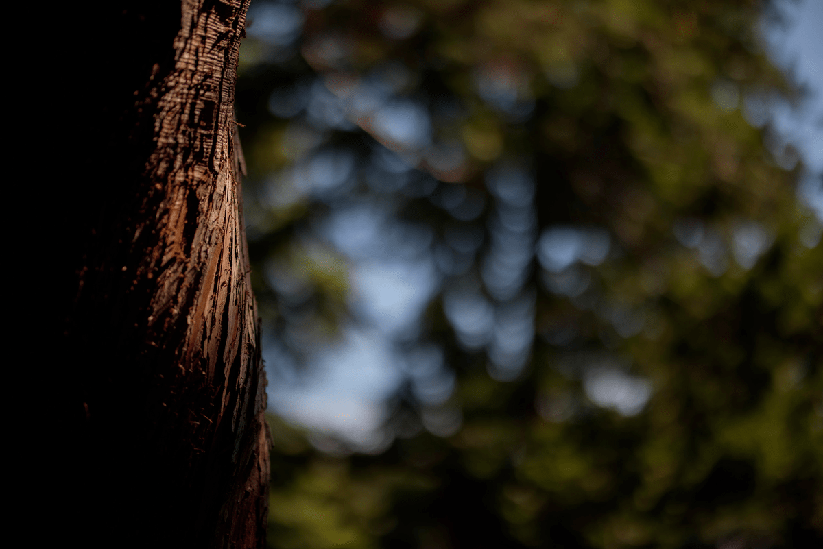 Обзор фотокамеры Canon EOS R5