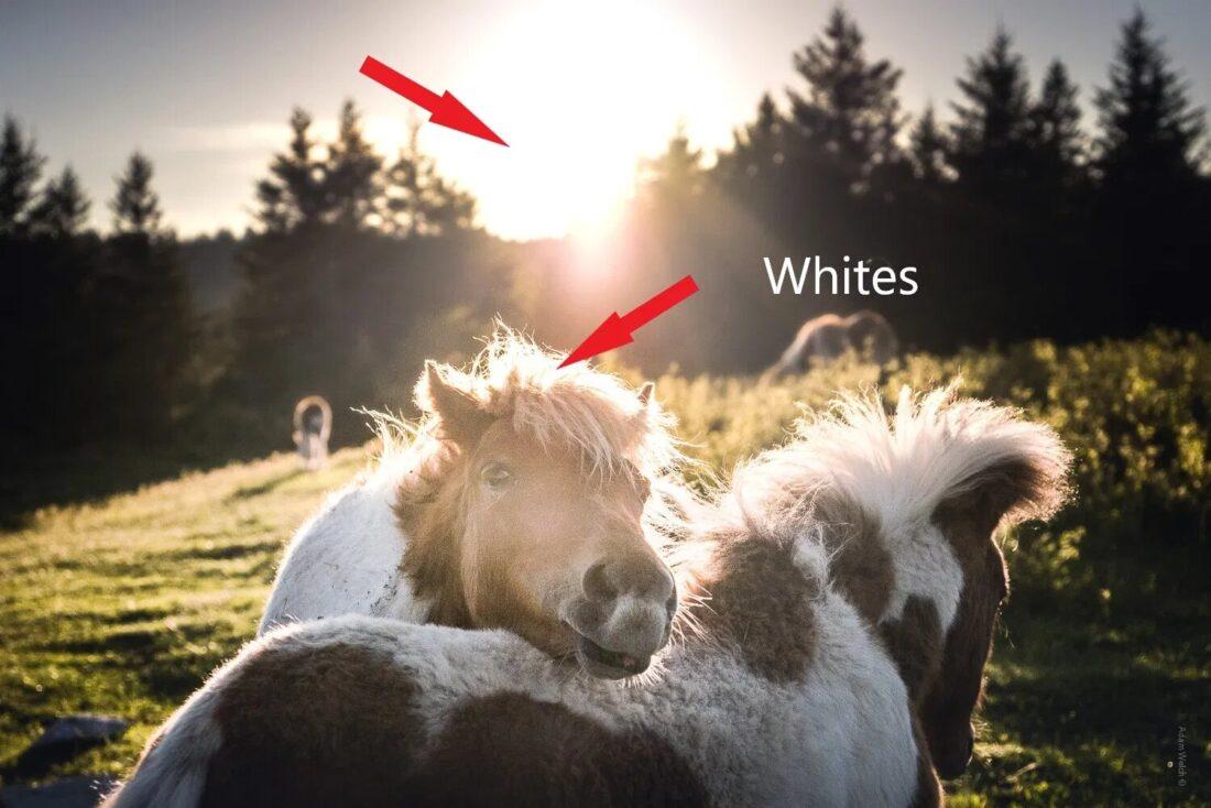 Белые тона в фотографии