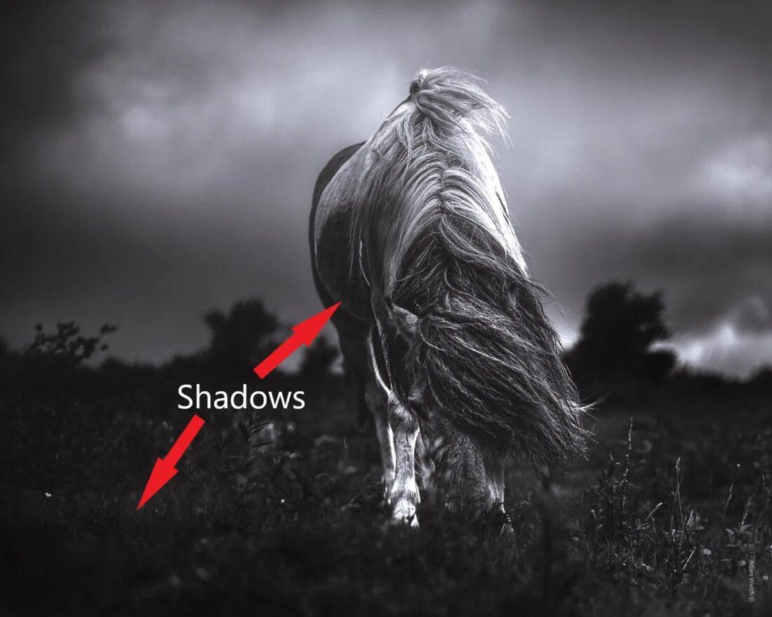 Темные тона в фотографии
