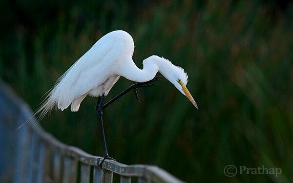 Как фотографировать птиц